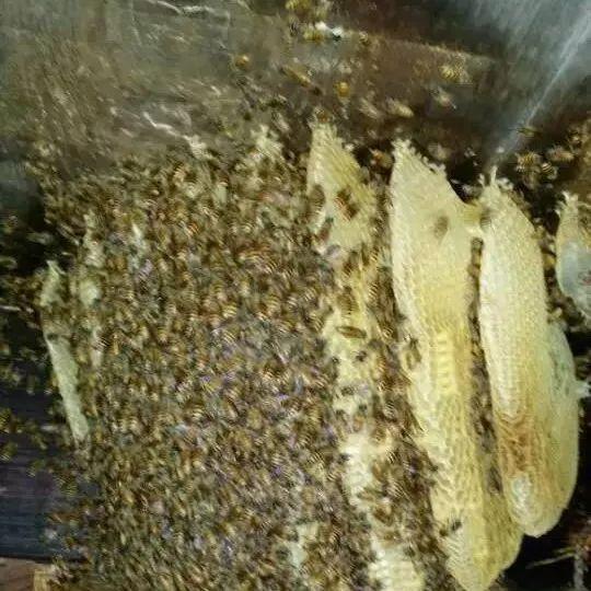 蜂蜜水可以火吗 枸杞菊花茶加蜂蜜 时间 蜂蜜检测标准 蜂蜜醋糖尿病