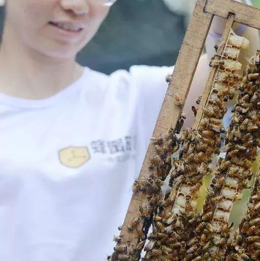 普洱咖啡花蜂蜜 例假期间能喝蜂蜜吗 蜂蜜怎么测试 德国蜂蜜造假 蜂蜜泡酒的功效