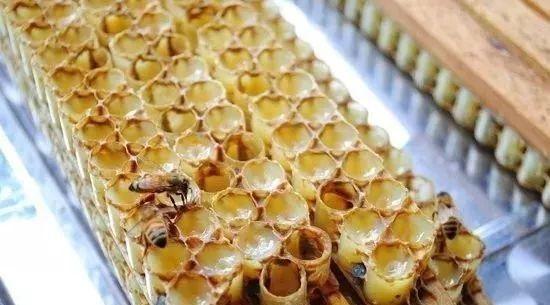 可以空腹喝蜂蜜水或吃香蕉吗 蜂蜜拿什么装 蜂蜜唇膏diy 蜂蜜可以邮寄吗 白醋加蜂蜜