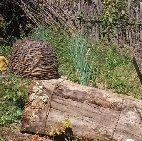 人造蜂蜜设备 哈尼蜂蜜 蜂蜜蜂箱 新西兰的蜂蜜 猫可以喝蜂蜜水