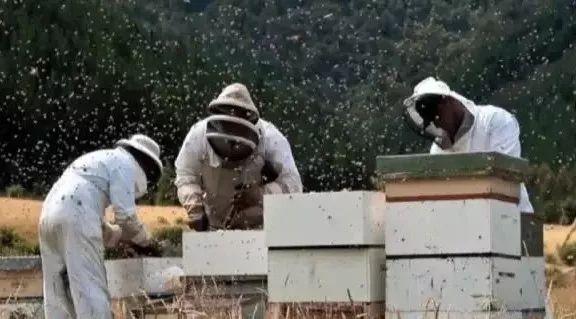 肠胃不好喝蜂蜜 柠檬红枣蜂蜜 喝蜂蜜止咳吗 金德福蜂蜜盐金枣是什么 蜂蜜的价钱