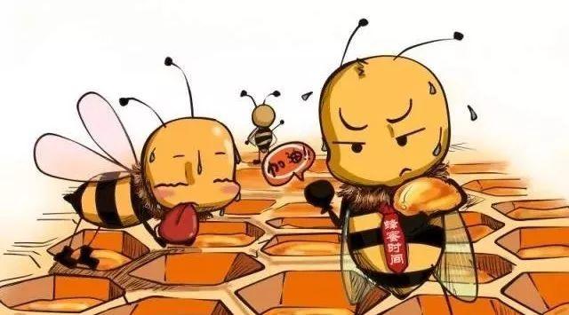 【惊呆】天然蜂蜜一定是好的吗?