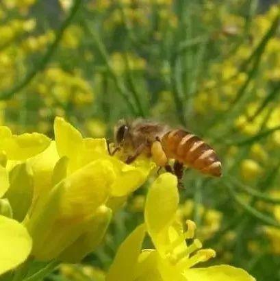 蜂蜜和白糖比哪个甜 蜂蜜是单糖 怀田土蜂蜜 痛经能喝蜂蜜水吗 蜂蜜怎么用祛斑