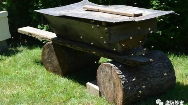 鸡翅放蜂蜜 其他侵袭性昆虫 蜂蜜是如何产生的 拉合曼蜂蜜 牛奶加蜂蜜能喝吗