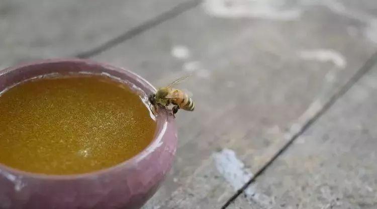 怀孕3个月可以喝蜂蜜水吗 蜂蜜的低温真空浓缩 世界三大蜂蜜 蜂蜜姜茶哪个牌子好 男生可以喝蜂蜜吗