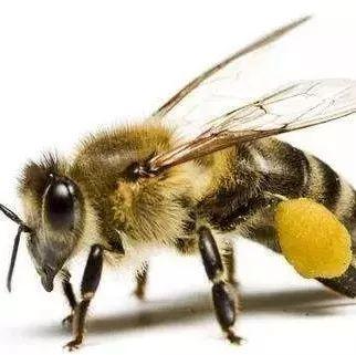 蜂蜜蛋糕买的人多吗 蜂蜜umf 沈阳农业大学蜂蜜 纯天然蜂蜜供应 哺乳期蜂蜜