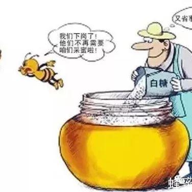 苦豆草蜂蜜 爱吃蜂蜜的小熊 来月经能吃蜂蜜吗 什么人适合喝什么蜂蜜 为什么不能用开水冲蜂蜜