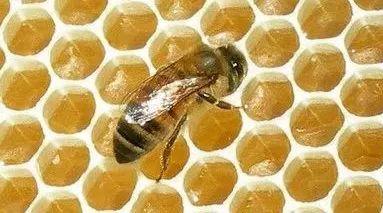 蜂蜜水是么时候喝 蜂蜜恋爱漫画 蜂蜜不能和什么一起吃 天喔蜂蜜柚子茶 脾胃虚弱生姜蜂蜜