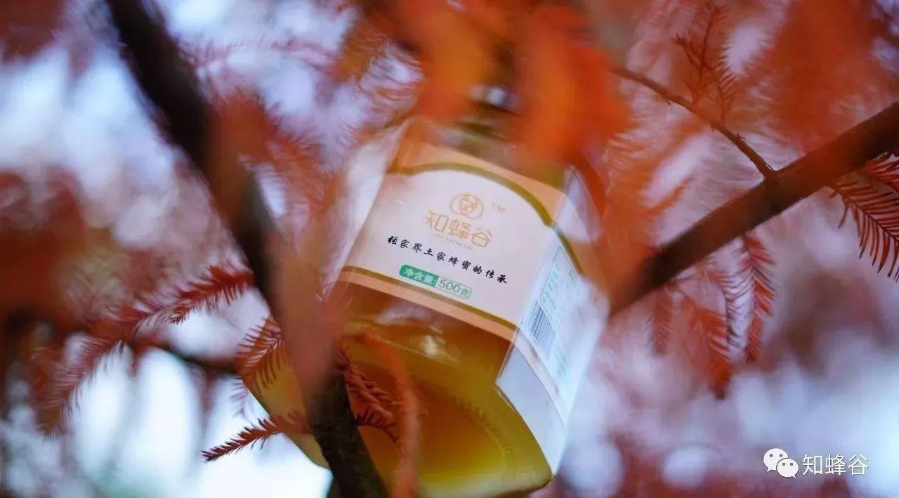 红枣枸杞蜂蜜泡纯米酒 蜜爱蜜的蜂蜜是真的吗 冬天喝蜂蜜水好处 蜂蜜对阳痿 夏天蜂蜜要放冰箱吗