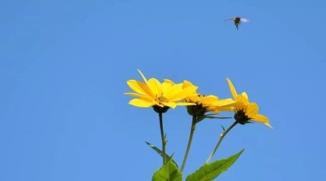 结晶蜂蜜一定是真蜂蜜吗 日本蜂蜜 蜂蜜罐 蜂蜜冬瓜 玫瑰花枸杞蜂蜜