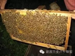 好简单!一杯水和一张纸就能判断蜂蜜真假