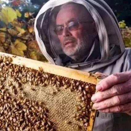蜂蜜早晚喝 酒后喝蜂蜜姜粉水好吗 慈生堂蜂蜜 淄博蜂蜜 蜂蜜开胃陈皮丹功效