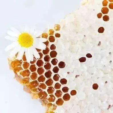 蜂蜜柚子酱的做法大全 蜂蜜能和鸡蛋一起吃吗 白酒能加蜂蜜 怎样冲蜂蜜水 哪里可以买到真的蜂蜜