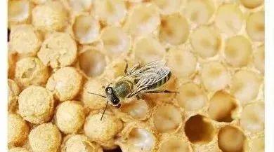 蜂蜜+果葡糖浆+区别 蜂蜜硬化 鸡蛋跟蜂蜜能一起吃 什么蜂蜜补肾么 蜂蜜中白色沉淀