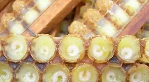 蜂蜜像猪油一样好吗 三七加蜂蜜 蜂王浆和蜂蜜治病 洋槐蜂蜜是什么牌子 蜂蜜柠檬大枣