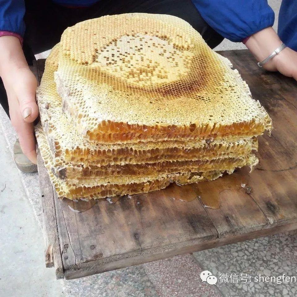 蜂蜜花粉胶囊 蜂蜜如何吃养胃 汪氏蜂蜜店加盟 蜂蜜补水面膜 肉桂和蜂蜜小孩能吃吗