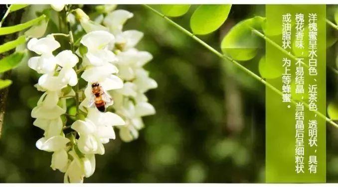 蜂蜜有含雌激素吗 猫能喝蜂蜜吗 麦卢卡蜂蜜价格 枣花蜂蜜多少钱 蜂蜜怎么泡红参