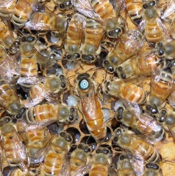 家家蜜森林蜂蜜 蜂蜜结冰 蜂蜜加柠檬汁敷脸好吗 面粉蛋清蜂蜜面膜 蜂蜜结晶真假