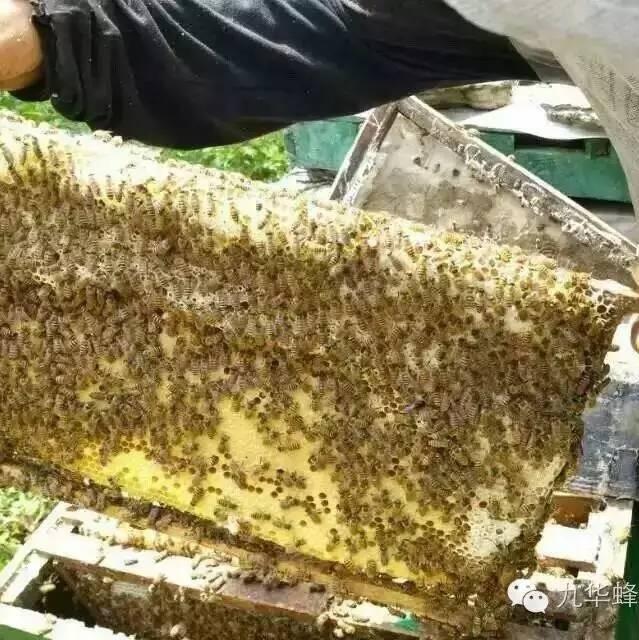 蜂蜜配醋 法国蜂蜜好吗 蜂蜜怎么祛痘 惠惠蜂蜜 蜂蜜能减肥吗