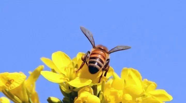 蜂蜜价格 1岁宝宝可以喝蜂蜜吗 蜂蜜柚子茶哪个牌子好 豆腐脑加蜂蜜 蜂蜜水的作用与功效