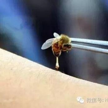 """蜂毒——天然的""""青霉素"""""""