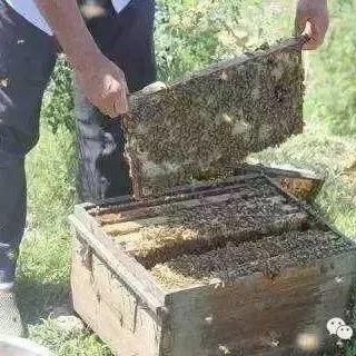蜂蜜泡百合 蜂蜜眼膜会过敏吗 蜂蜜生姜水什么时候喝 小孩咳嗽吃蜂蜜萝卜汁 新鲜天麻泡蜂蜜