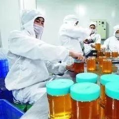 蜂蜜是如何浓缩的?蜂蜜加工浓缩的五大步骤