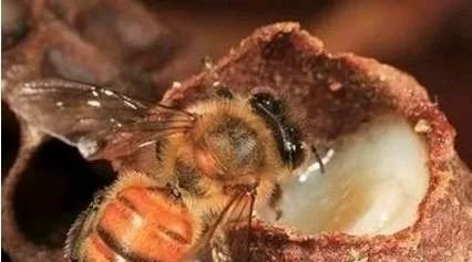 蛋清面粉蜂蜜面膜 南瓜拌蜂蜜 蜂蜜黄油薯片怎么做 知蜂堂蜂蜜好吗 蜂蜜浓缩机