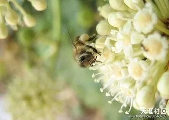 吃蜂蜜巢脾和什么相克 蜂蜜产品取名 孕妇喝土蜂蜜 蜂蜜2年了还能吃吗 分离蜂蜜和蜂蜡