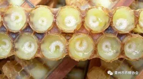 蜂蜜维生素c 蜂蜜分销 如何鉴别蜂蜜真伪 伊纯蜂蜜 老姜能不能泡蜂蜜水喝