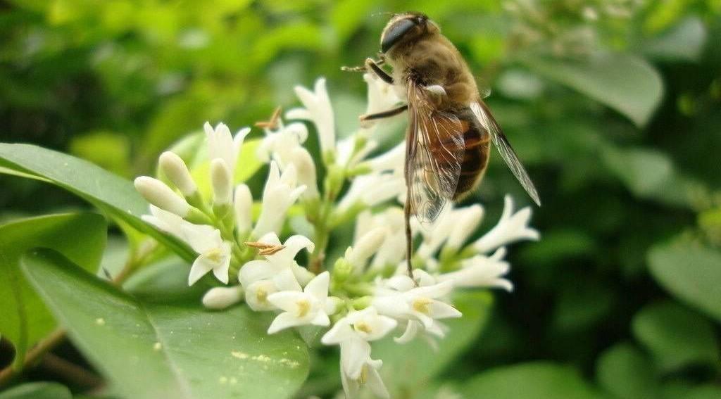 苹果拌蜂蜜 酒可以和蜂蜜一起喝吗 蜂蜜几勺 蜂蜜识别 什么牌子的蜂蜜好