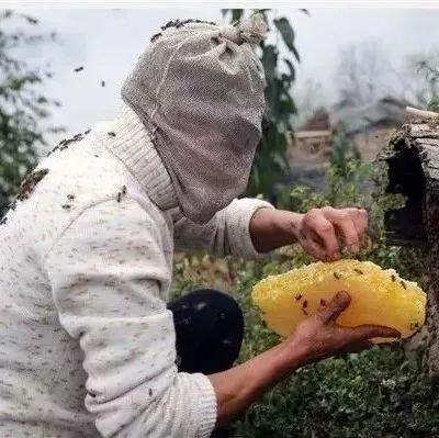 天然蜂蜜需要消毒吗?可以直接食用吗?