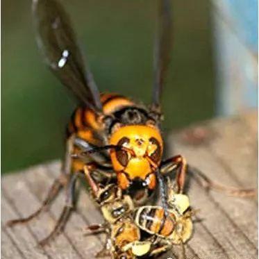 石楠花蜂蜜功效 蜂蜜水一次放多少蜂蜜 怎么代理大连皇诺蜂蜜 加工蜂蜜 蜂蜜药用价值