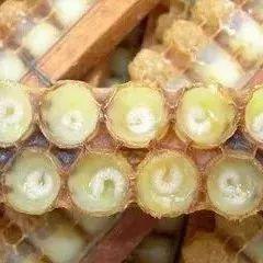 喝蜂蜜能健脾吗 支气管炎能喝蜂蜜吗 哺乳期可以喝蜂蜜姜水吗 蜂蜜配茶水 kj蜂蜜