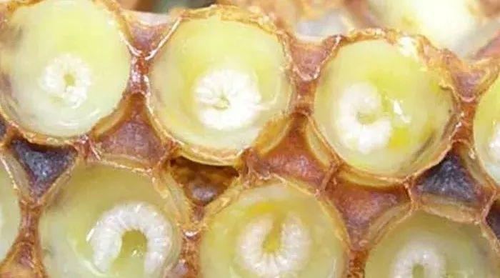 葱白和蜂蜜 蜂蜜可以与什么同吃 古代蜂蜜 合肥蜂蜜公司 蜂蜜蛋清面粉面膜怎么做