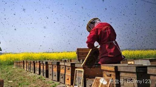 蜂蜜能加茶 黑芝麻蜂蜜脱毛 创意蜂蜜的广告词 如何挑选蜂蜜 桂花蜂蜜如何
