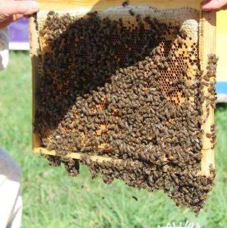蜂蜜有几年 蜂蜜酸奶面膜可以天天做吗 生姜红茶蜂蜜 山东蒙山蜂蜜 蜂花粉