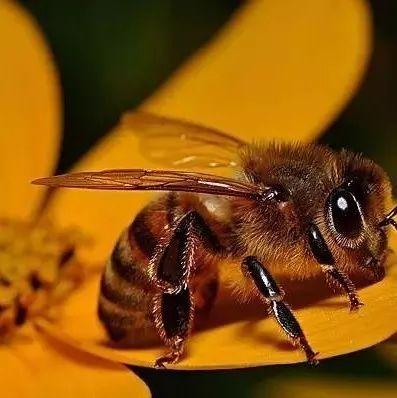 拔罐减肥能喝蜂蜜水吗 蜂蜜怎么取出来 熟葱和蜂蜜能一起吃吗 蜂蜜鉴别方法 散装蜂蜜进超市