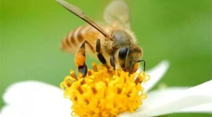 长春汪氏蜂蜜 夏枯草蜂蜜 长寿老人吃蜂蜜 蜂蜜椰子肉槟榔谷 柠檬蜂蜜水的功效