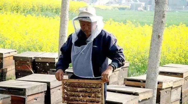蜂蜜橘子 西天目蜂蜜农家 牛奶蜂蜜压缩面膜 冲了蜂蜜水发现有沉淀 nature蜂蜜