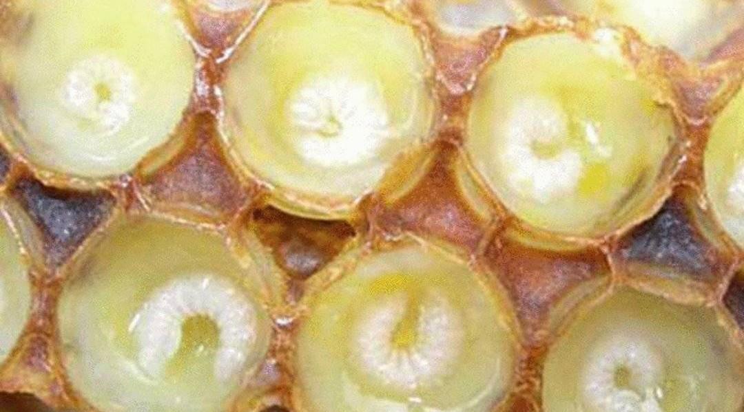 泡药酒加蜂蜜 蜂蜜桂花炖奶 蜂蜜泡酒 蜂蜜能补气血吗 哺乳期妈妈喝蜂蜜