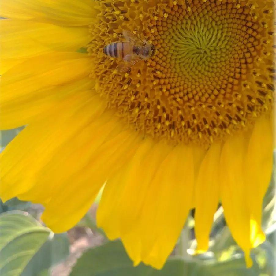 蜂蜜水什么体质 蜂蜜出口包装 南方的蜂蜜好还是北方的好 宝宝能不能喝蜂蜜水 牛奶蜂蜜小餐包