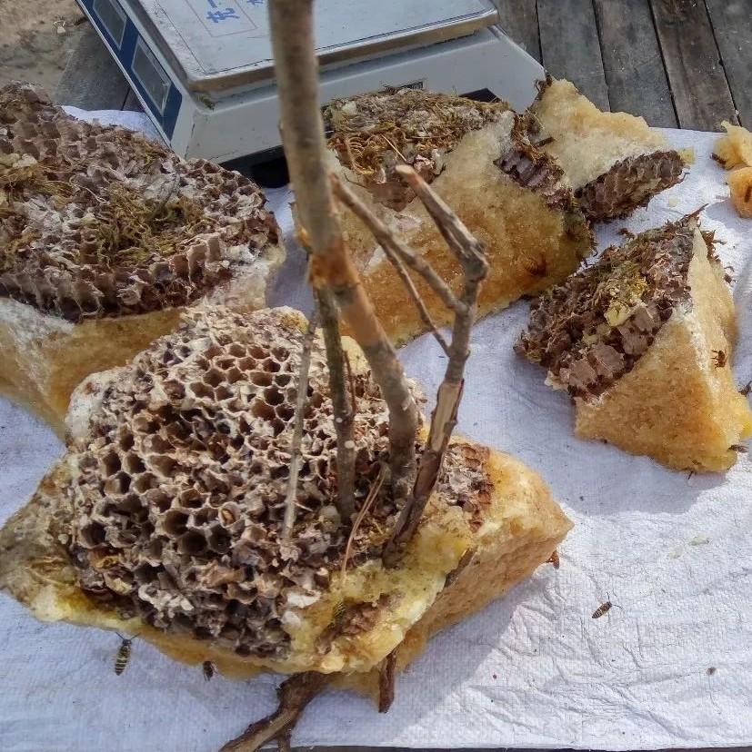 蜂蜜怎么辨别好坏 蜂蜜最长可以放多久 孩子喝蜂蜜水会性早熟 真蜂蜜多少 老蜂农蜂蜜价格