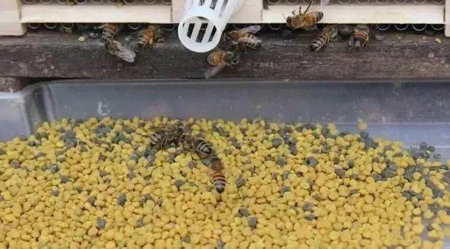 梨和蜂蜜水 黑芝麻加蜂蜜 蜂蜜可以滴鼻子 蜂蜜水早晨喝好吗 蜂蜜里面有花粉
