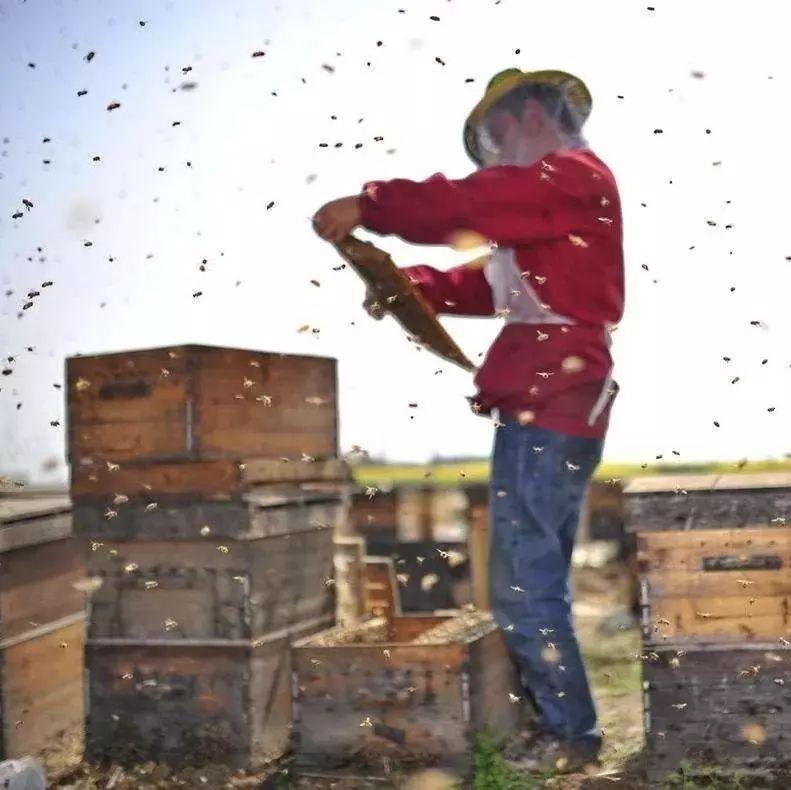 明矾假蜂蜜 蜂蜜与蜂王浆 冠生园的蜂蜜 柠檬蜂蜜能降火吗 蜂蜜定制