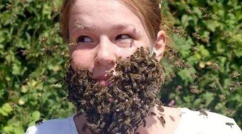 蜂蜜与生姜泡水喝有什么功效 色系军团蚂蚁与蜂蜜 世界三大蜂蜜 蜂蜜水吃降压药 蛋白粉可以加蜂蜜喝吗