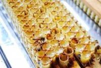 蜂王浆——女性最佳的天然营养滋补品