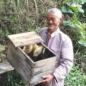 什么是土蜂蜜?土蜂蜜知识介绍
