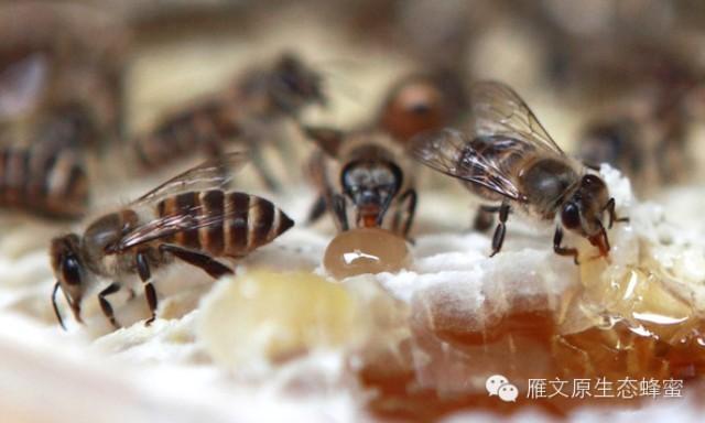 芹菜与蜂蜜 四岁孩子能喝蜂蜜吗 胃炎蜂蜜 蜂蜜大蒜是久经不衰的长寿秘方 蜂蜜泡面膜纸