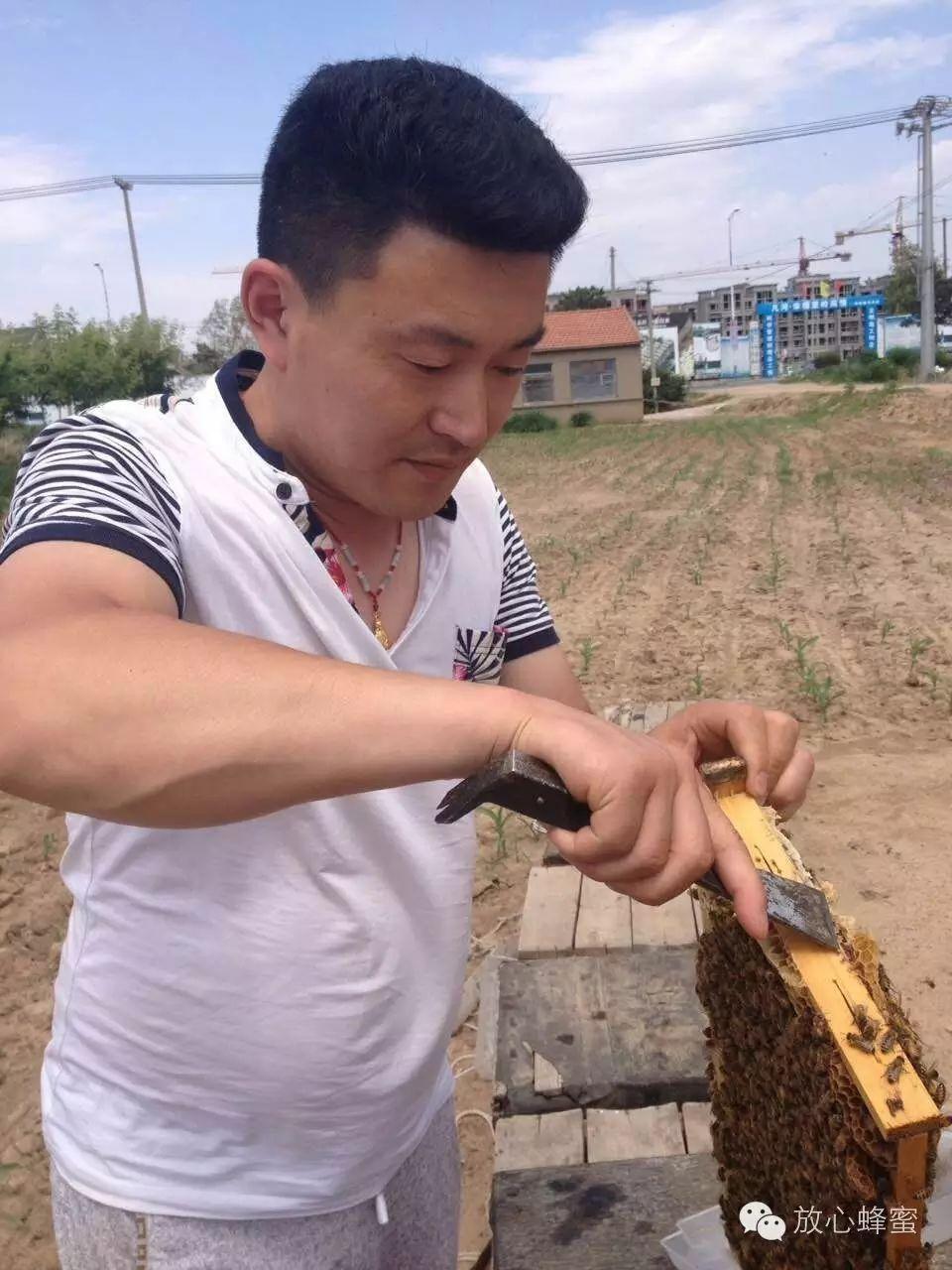 绿茶加蜂蜜能减肥吗 明园牌蜂蜜 姜能和蜂蜜水一起用吗 西红柿蜂蜜面膜怎么做 晚上睡前喝蜂蜜好吗